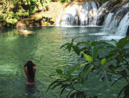 All About Natural Swimming Pools