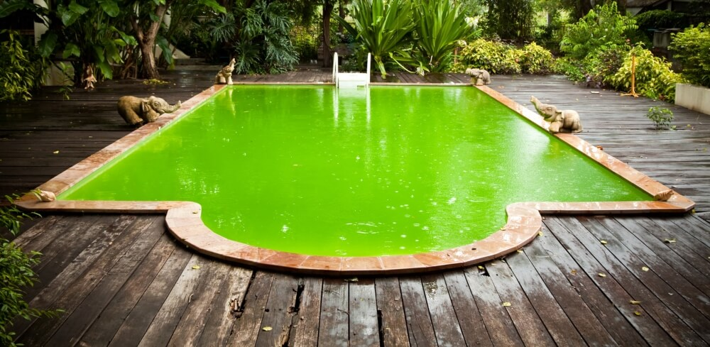 Old Swimming Pool With Green Water